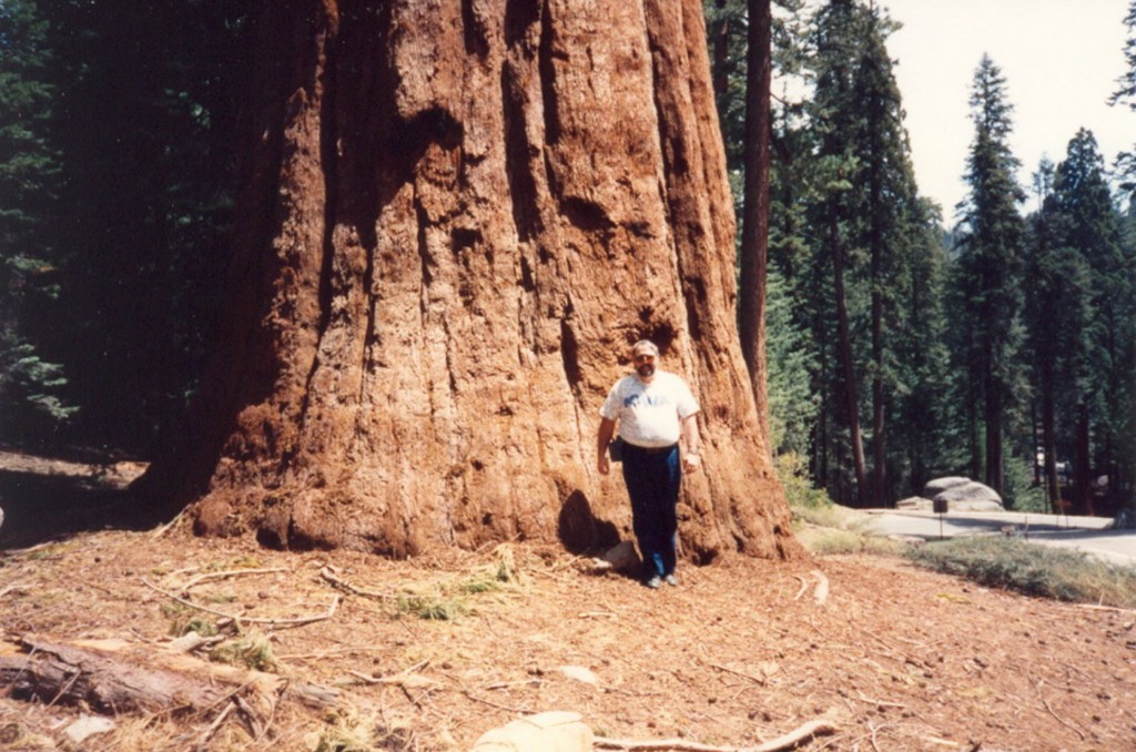 CH_11_SequoiaTree_GSF_001