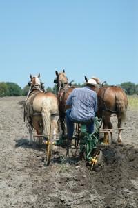 Plow_horse_100